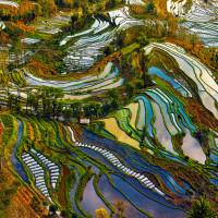 рисовые плантации Юаньян (Yuanyang).
