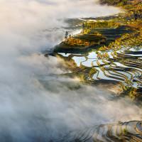 Где самые красивые рисовые плантации?