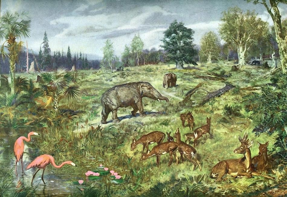 эпоха олигоцена