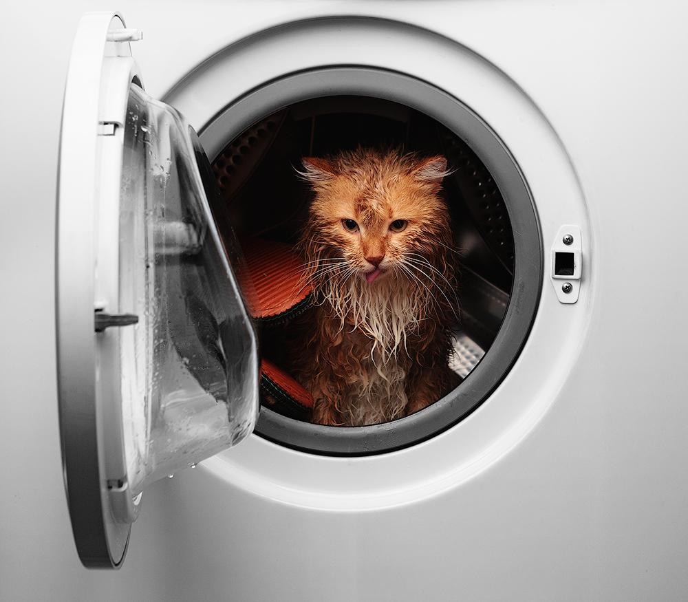 Как устроена стиральная машина?