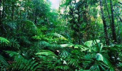 Как Индонезия собирается защищать тропические леса?