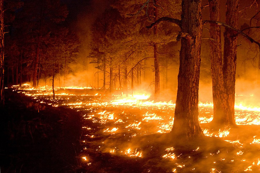 Почему происходят лесные пожары?
