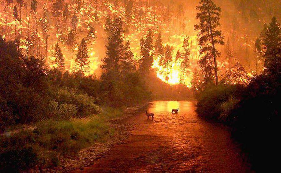 Как природа приспособилась к лесным пожарам?