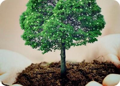 """Что необходимо знать об акции """"Миллион Деревьев""""?"""