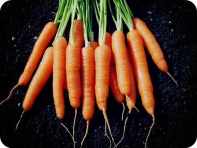 От чего лечит морковка