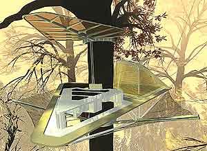 Гнездо среди ветвей