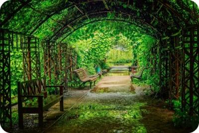 Как правильно проводить озеленение в Москве