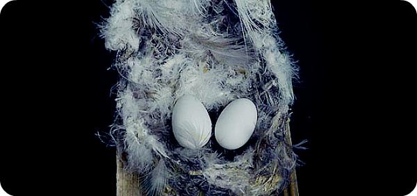 Какого вкуса птичьи гнезда?