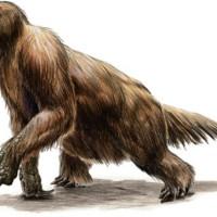 Кто является прародителем ленивца?