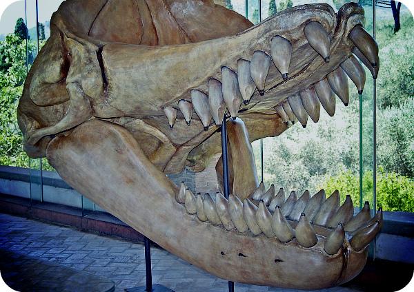 Чем питался гигантский кит древности Leviathan melvillei?